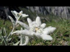 edelweiss Deutsch Alemão Germany - Freddy Breck - YouTube