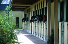 The Cadre noir classic visit alows to discover the history of the school, the main arena, the Prestige stable and tack room