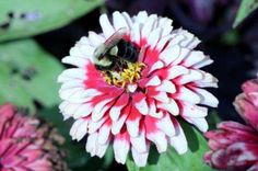 """""""Researchers confirm that #neonicotinoid #insecticides impair #bee's brains"""""""