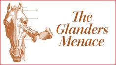 The Glanders Menace