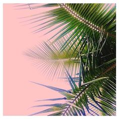 #PlantsOnPink by @asjasanchez