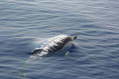 Asinara#delfini#