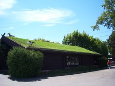 Sod roof for the livestock to graze..would anyone really be surprised if i did this?