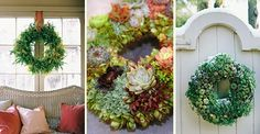 PlantTherapy: Living Wreaths