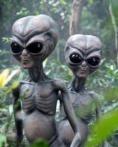 Net - Life Size Zetans Directly from planet Serpo in the Zeta Reticuli galaxy Aliens And Ufos, Ancient Aliens, Alien Photos, Alien Aesthetic, Grey Alien, Alien Tattoo, Kobold, Psy Art, Alien Races