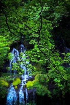 Doryu falls, Yamanashi, Japan via 東京カメラ部 New:砂田賢一  吐竜の滝 #緑 #Green