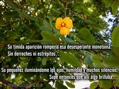 Su pequeñez iluminándome los ojos… humildad y muchos silencios. Supe entonces que allí algo brillaba… http://www.marcelozamora.com/escritos/pasion-es-vida.html
