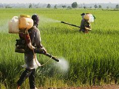 Enthält Bio weniger Schadstoffe? | eatsmarter.de
