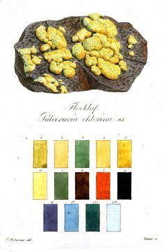 Lichen color chart