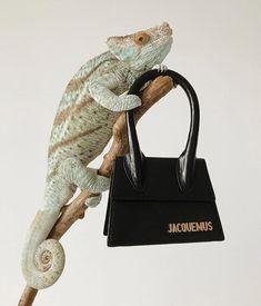 jacquemus dm to orde Magazine Mode, Magazine Editorial, Jacquemus, I Saw, My Dream, Fashion Photography, Style Inspiration, Bags, Animals