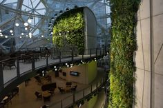 Inside Amazon's Giant Spheres, Where Workers Chill in a Mini Rainforest