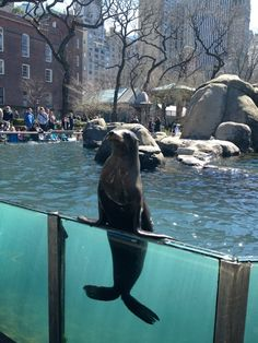 I saw the sea lions they know loads of tricks :)