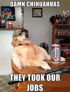 the redneck retriever. Mildly offensive, still too funny.