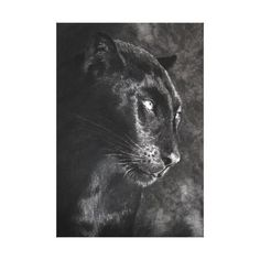 Browse our unique Black wedding gifts today. The happy couple will cherish a sentimental gift from Zazzle for years to come. Sentimental Gifts, Black Panther, Wedding Gifts, Charcoal, Canvas Prints, Animals, Wedding Day Gifts, Wedding Giveaways, Photo Canvas Prints