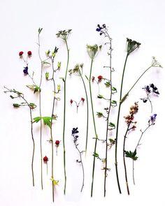 ja-soon-kim-botanical-arrangements-6