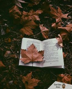 Fall Reading - Foto Home Autumn Photography, Book Photography, Creative Photography, Autumn Aesthetic Photography, Autumn Aesthetic Tumblr, Book Wallpaper, Fall Wallpaper, Leaves Wallpaper, Fall Pictures