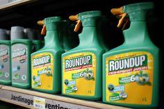 """#Pesticides: """"peu probable"""" que le glyphosate soit cancerogène, selon l'ONU - Le Vif: Le Vif Pesticides: """"peu probable"""" que le glyphosate…"""