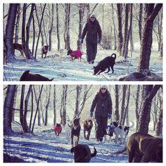 Through the woods. #evasplaypupsPA #dogs #dogscamp #doggievacays #playtime #hikingdogs #beautifulview #dogsinnature #runfree #sweaterweather #endlessmountains #mountpleasant #PA #pennsylvania