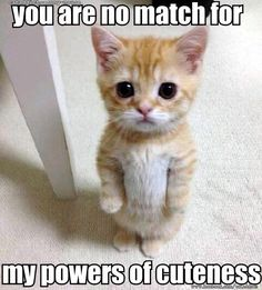 Image result for cats with superpowers