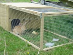 This is a rabbit house consists of a wooden nest and a wooden frame wire mesh run, also a rabbit staying in the corner.