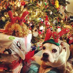 Wishing you a Woofy Christmas!