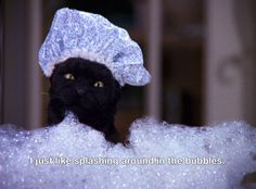 fave salem quotes and sabrina funnies Animal Memes, Funny Animals, Cute Animals, Sabrina Cat, Salem Saberhagen, Salem Cat, Cat Memes, Funny Memes, Hilarious