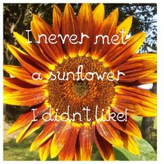 "~ ""I never met a sunflower I didn't like!"" picture quote ~ sunflower quotes ~ #PhotoTakenByRosemary #CapturedIt"