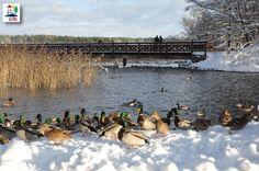 Olecko w zimie - Winter in Treuburg