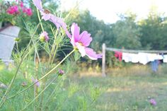Country Clothesline