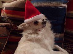 Santa dog!!