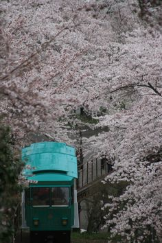 Mid-April is famous for its cherry blossoms in full bloom from late March. Sakura Cherry Blossom, Cherry Blossoms, Beautiful Scenery, Beautiful Gardens, Miyagi, Japanese Culture, Japan Travel, Destinations, Castle