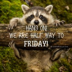 Wednesday Humor, Friday Meme, Good Morning Wednesday, Good Morning Post, Funny Animal Images, Funny Animals, Make Your Own Shirt, Social Media Engagement, Fun Quotes