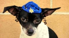 2.26.15 - Dogs Who Are NOT Happy About Their Hats17