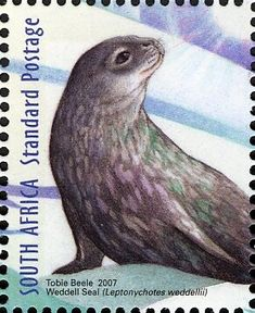 (International Polar and Heliophysical Weddell Seal) Weird Creatures, Vintage Stamps, Stamp Collecting, Mail Art, Under The Sea, Mammals, South Africa, Whale, Countries