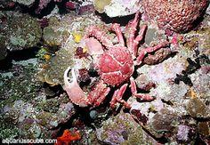 Diving in Honduras, Roatan Honduras Roatan, Scuba Diving, Diving