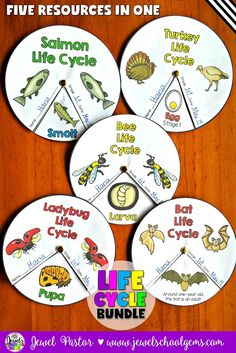 Life Cycles Bundle (Bats, Bees, Ladybugs, Salmon and Turkey) by Jewel Pastor (TeachersPayTeachers) | This Life Cycle Wheels Bundle is the second set of my life cycles line. This resource contains five wheel packets to help your students review what they have learned about the life cycles of bats, bees, ladybugs, salmon and turkey. | Get the individual life cycles or buy this bundle to save!