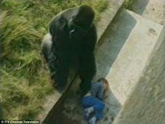 El caso de Harambe, el Gorila ASESINADO el fin de semana pasado en el Zoológico de los Estados Un...