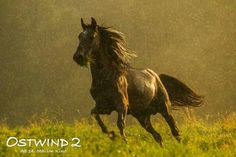 Dream Stables, Horse Photography, Equestrian, Mustang, Cute Animals, Horses, Whisper, Image, Beautiful
