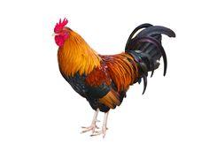 Emblèmes de la France : le coq gaulois