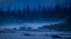 Finding a Lost Wild Place Amongst the Mist of Crescent River - http://www.xexplore.com/mist-crescent-river/?utm_campaign=coschedule&utm_source=pinterest&utm_medium=Steve&utm_content=Finding%20a%20Lost%20Wild%20Place%20Amongst%20the%20Mist%20of%20Crescent%20River