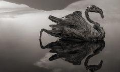 Qualquer animal que toca o lago Natron, na Tanzânia, se transforma em pedra por causa de seu alto grau de alcalinidade. Click de Nick Brandt.