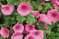Make room for these underused annuals: Let's face it: There's a lot to love about growing annuals. Here are 4 more plants to add to your list of favorites.