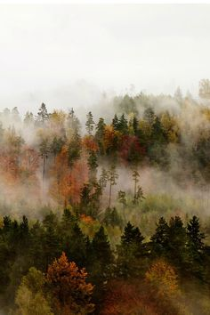 nordvarg: Fog by Jan Kvasnička autumn blog all year round that follows back☾☯✿