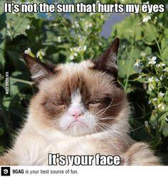 Grumpy cat I love you