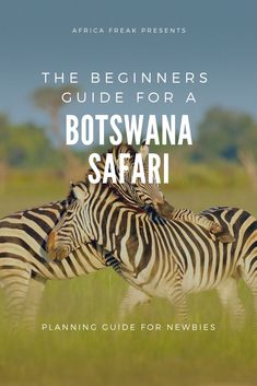 Botswana Safari: The Planning Guide for Beginners A Botswana safari excites all the senses. This Southern African country is one of the world's final wildlife refuges, where wild animals outnumber people. This beginners planning guide shows you the places Chobe National Park, Africa Destinations, Travel Destinations, African Countries, Roadtrip, African Safari, Africa Travel, Travel Usa, Trip Planning