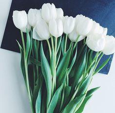 White. Tulips