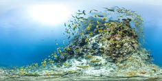 Interactive Coral Reef Panoramas Will Make You Hate Your Landlubbing Life - Wired Science