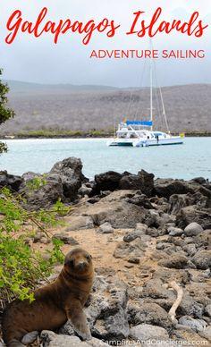 Galapagos Islands 7-Day Cruise Ecuador, South America  #galapagos #wildlife