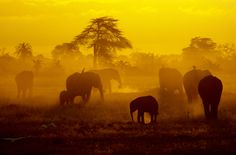 Grace Mysak — Elephant Sunrise