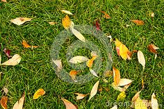 Grass and Leaves in the Fall